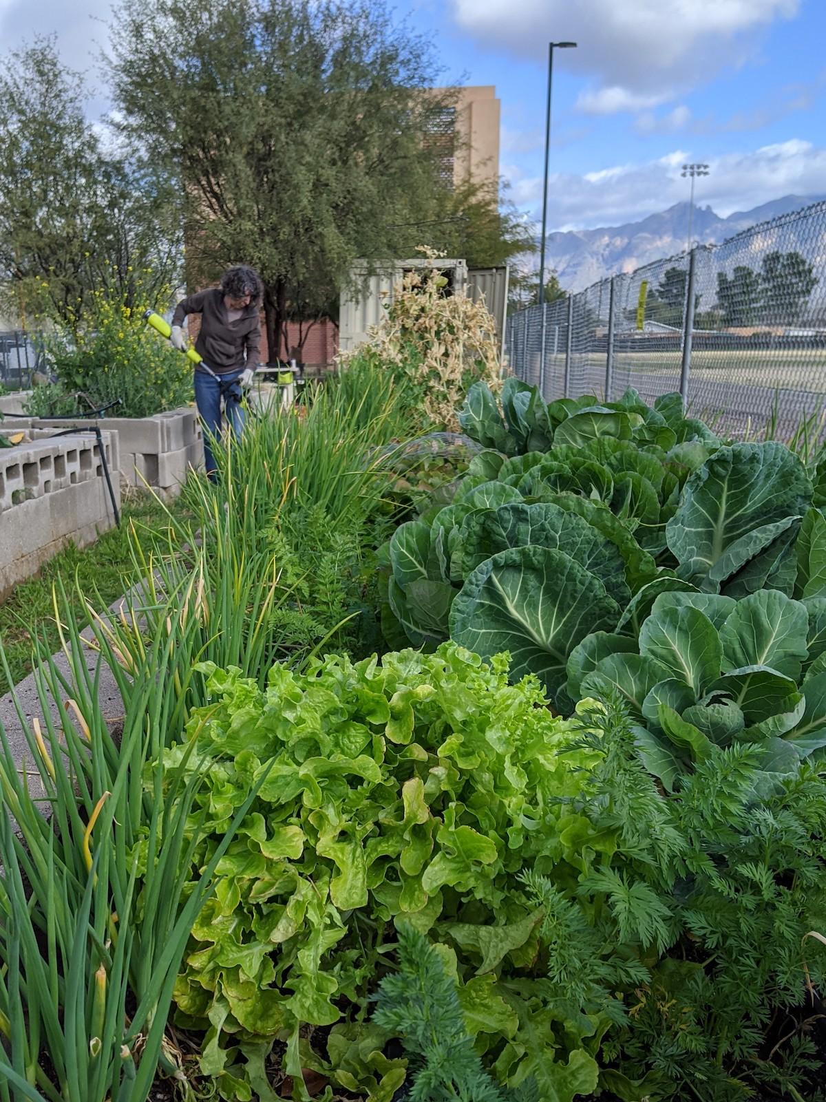 Start a new garden CGT